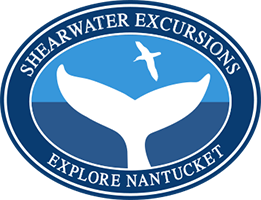 Shearwater Excursions